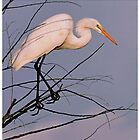 Inquisitive Great Egret by Dennis Stewart