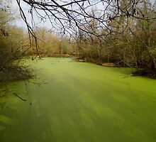 Green Swamp by WildestArt