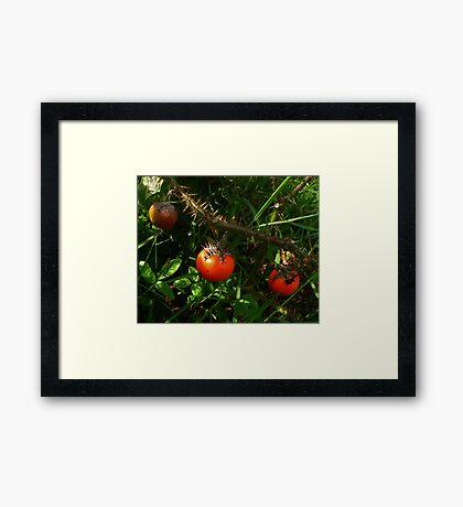 Mystery Vegetable Framed Print