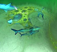 Sharks in blue & green by art-ZeST