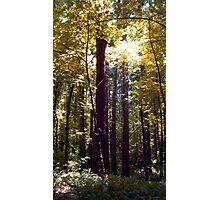Yellow Trees Photographic Print