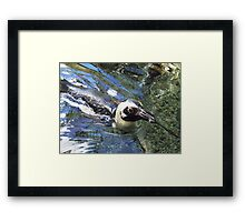 honolulu penguin Framed Print