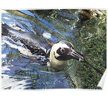 honolulu penguin Poster