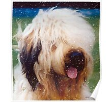 Briard Dog Portrait Poster