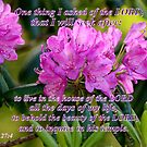 Behold the Beauty of the Lord by Paula Tohline  Calhoun