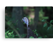 Turkey Head Canvas Print