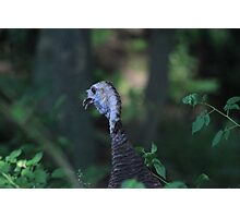 Turkey Head Photographic Print