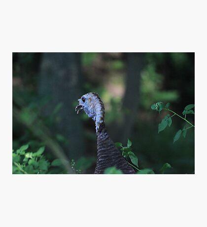 Turkey Head Photographic Print
