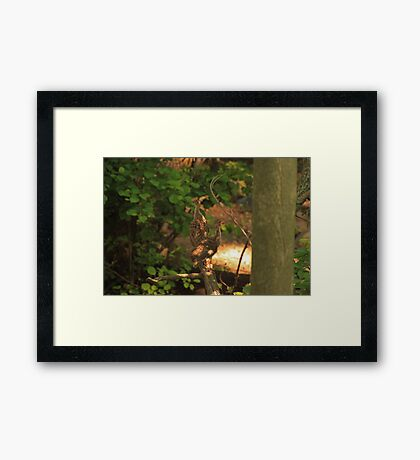 Baby Wild Turkeys Framed Print