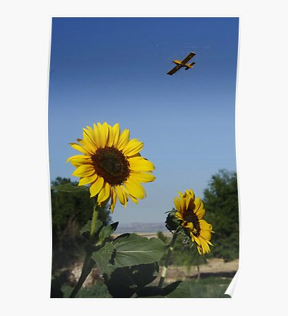 Sunflower and Spray Plane Poster
