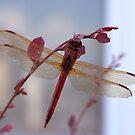 Cinnamon Red by Wviolet28