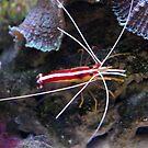 Shrimp by Annie Underwood