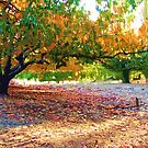 Persimmon Trees - Helen Hume by Golden Valley Tree Park