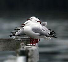Gulls by Tainia Finlay