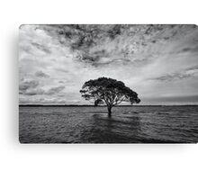 """A Lonely Life"" ∞ Brighton, QLD - Australia Canvas Print"