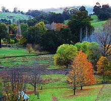 Pear Tree Lookout - Helen Hulme by Golden Valley Tree Park