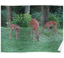 Mommmy Deerest and Her Twin Fawns Poster