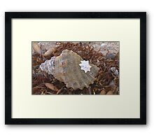 'Shell' Framed Print