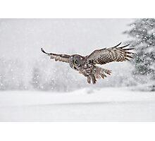 Always on the hunt... Photographic Print