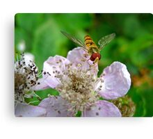 Hoverfly and Bramble Rose Canvas Print