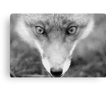 Face Fox Canvas Print