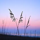 Sea Oats Sunrise 2 by Dawne Dunton