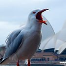 seagull at the opera house by milena boeva