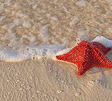 Bahama Starfish by Rashad Penn
