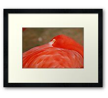 The Pink Flamingo Framed Print