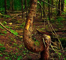 Twisted Tree in the Forrest by Nazareth