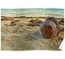Dried coconut washed up on shore Poster