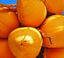 Golden Coconuts bundle by Rashad Penn