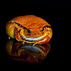 Tomato Frog by Val Saxby