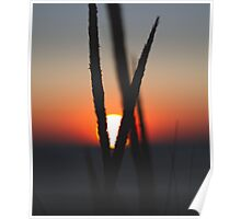 Sunset through beach grass Poster