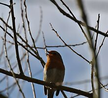 Singing Bird by photosbyJT