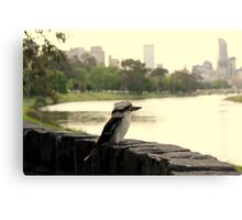 Kookaburra in Melbourne Canvas Print