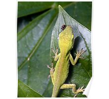 Green Anole with Fly Poster