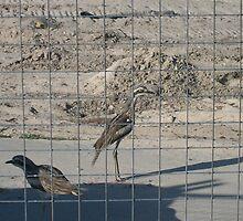 Jail Birds by KittenFlower