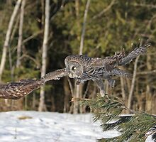 Silence takes flight by Heather King