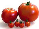 Happy Tomato Family by Susan S. Kline