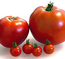 Happy Tomato Family by Susan S. Kline