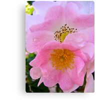 Governor Generals Roses 31 Canvas Print
