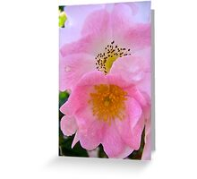 Governor Generals Roses 31 Greeting Card