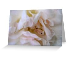 Governor Generals Roses 32 Greeting Card