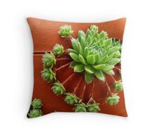 Hens and chicks 001 Throw Pillow