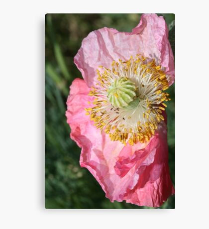 Crumpled poppy Canvas Print