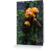 Wet fungii by the creek Greeting Card