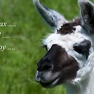 Relax, and enjoy llama by elainejhillson