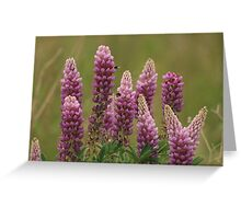 Lupin attracting the bees Greeting Card