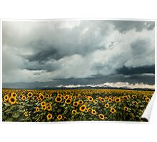 Rocky Mountain Sunflowers Poster